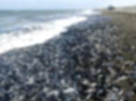 ocean-2646630_960_720.jpg