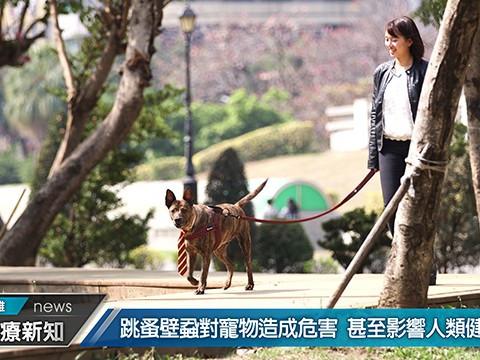 Bayer 寵物用藥媒體操作