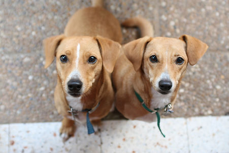 Dog Training Summerland, Dog Training Penticton, Obedience dog Class