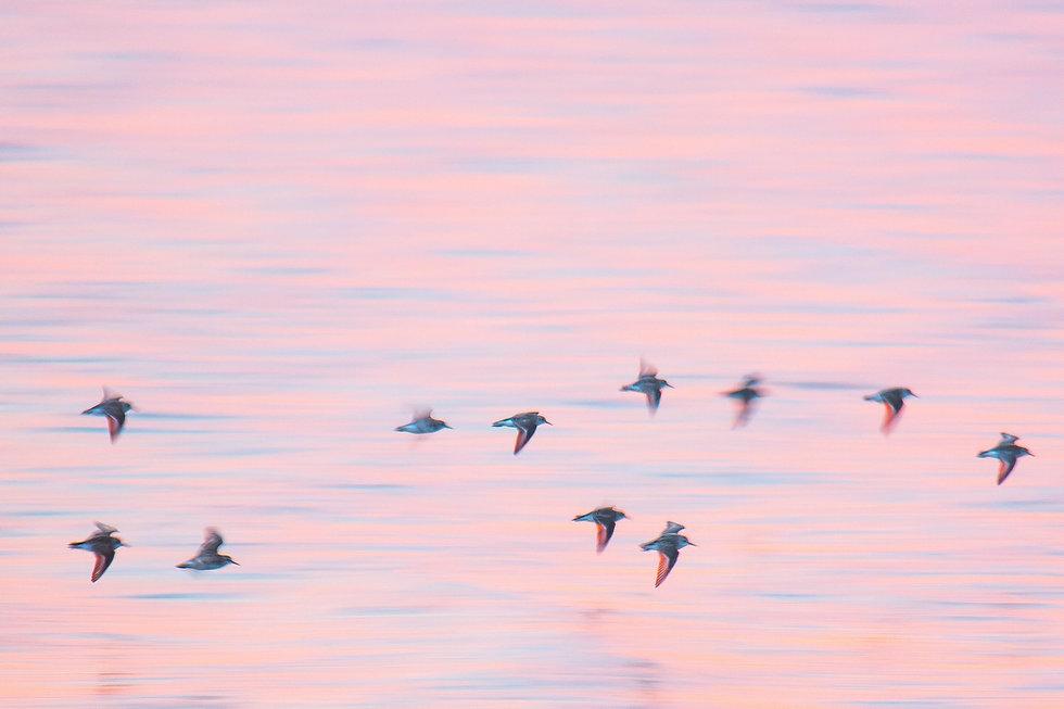 Birds Flying Representing Success.jpg