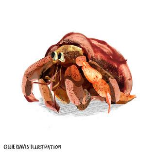 Hermet-crab.jpg
