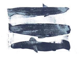 Shark,-Whale,-SharkWEB.jpg