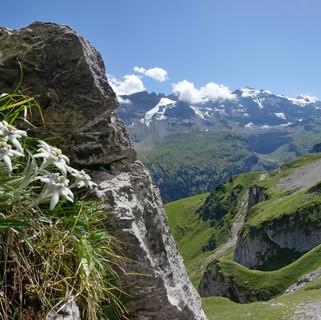 Edelweiss_UrnerBoden_Panorama2.jpg