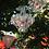 Thumbnail: FATBOY -  Rockcoco - Lustre outdoor
