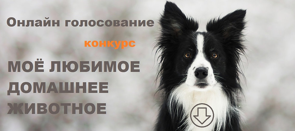 zima-vzgliad-morda-priroda-cherno-belaia