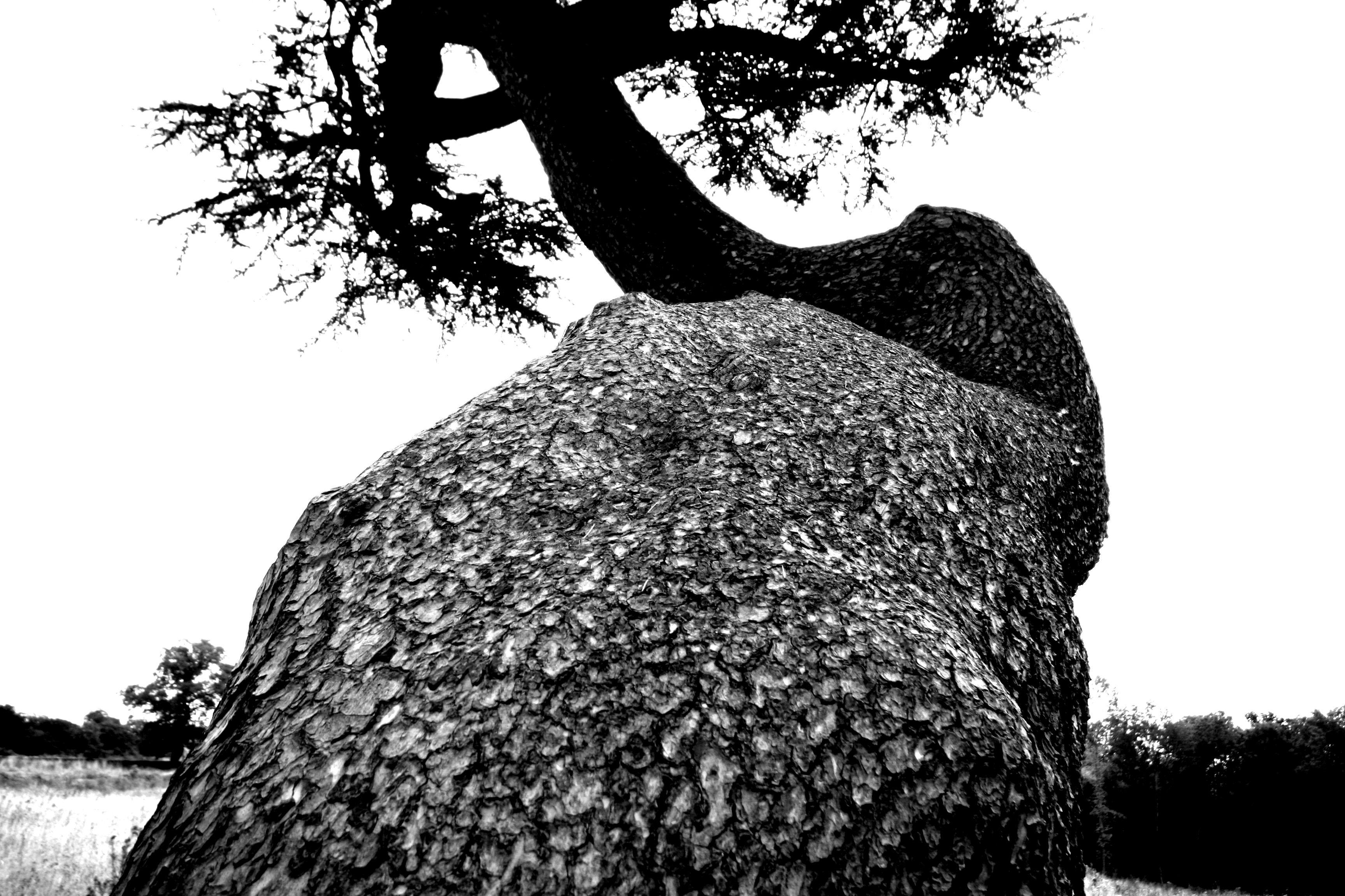 Tree - big