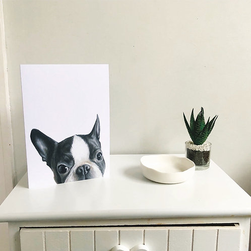 Boston Terrier A5 Greeting Card