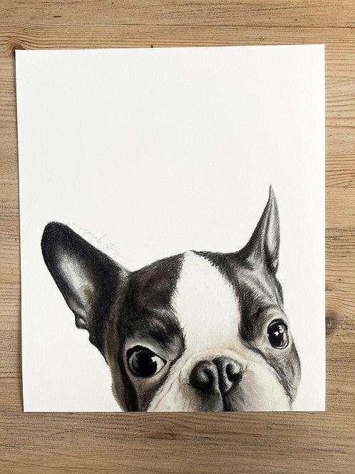 "10x12"" Fine Art Giclee Print of a Boston Terrier"