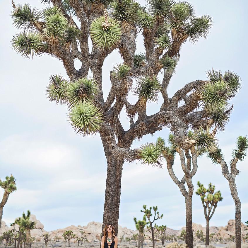 Joshua Tree 4