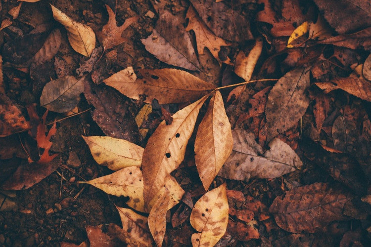 hojas-secas.jpg