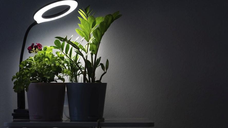 Sabia que Iluminação Artificial pode ajudar as suas plantas a crescer?