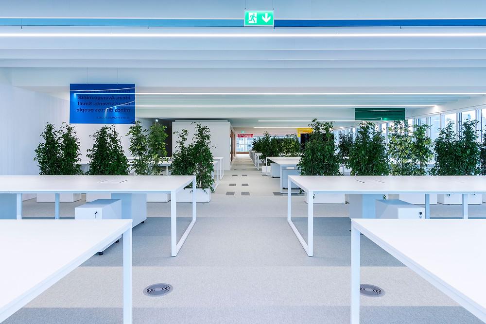Iluminaçao Tromilux nos escritórios da Bizay em Lisboa projeto da Paralelo Zero arquitetura linhas continuas em led open space