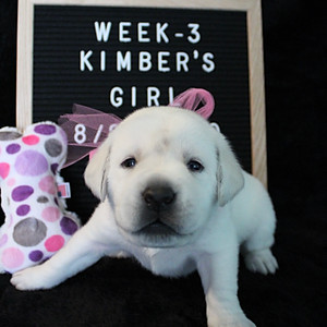 Puppies: W3