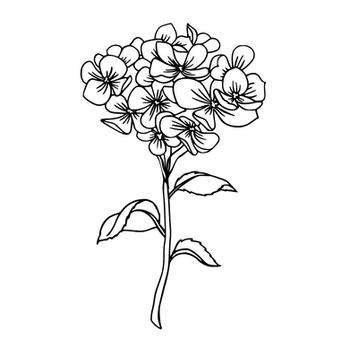 Illustrative Flowers