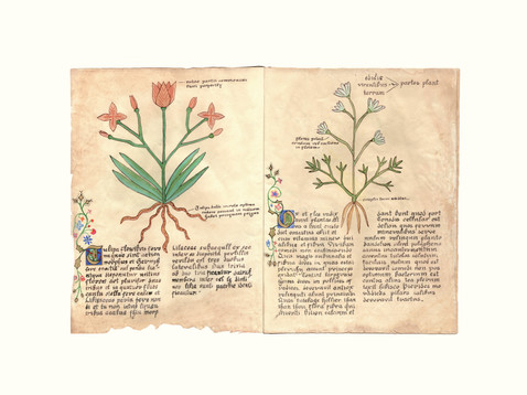 Botanical Manuscript