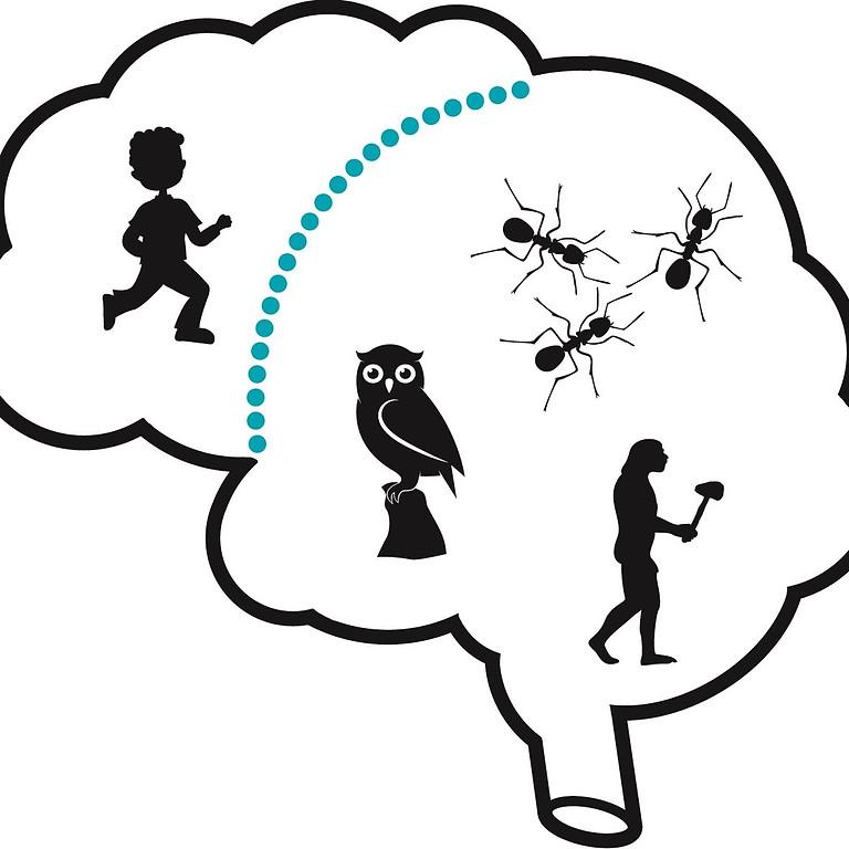 bootcamp (4 daagse) : Meesterschap over je brein
