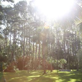 Beautiful sunshine coming through trees