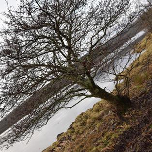 Garden and West Loch Fyne