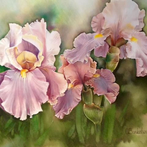 Irises in spring