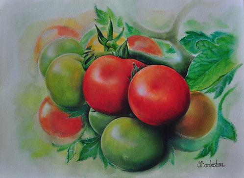 Green Tomatto