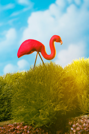 Berkowitz Photography_Flamingo.jpg