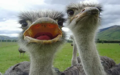 American Women Are Ostriches They Sip Their Coffee Still Believing The Morning News That Tells Us We Are In A Pandemic
