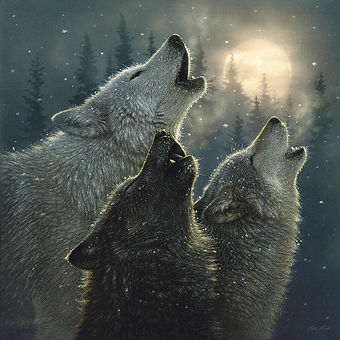 wolves-howling-moon-in-harmony-collin-bo