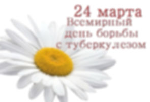 romashka.jpg