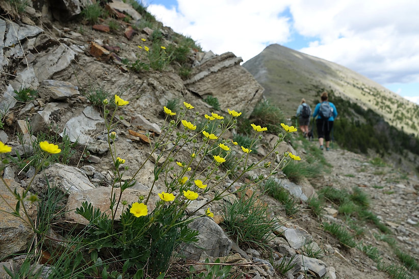 two girls hiking in montana with wildflowers