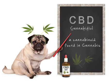 Can Cannabis help my anxious and reactive dog?
