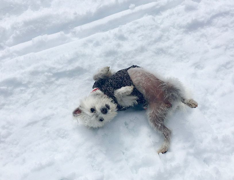 Buddy Dog Training & Care, Puppy Classes, Socialization