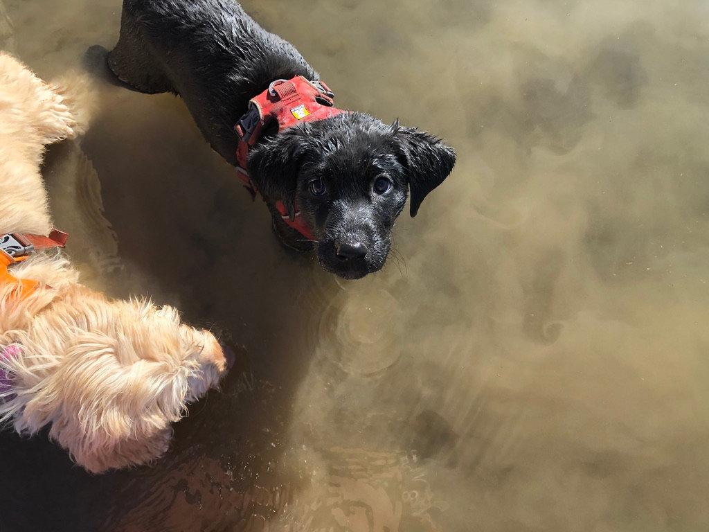 Puppy Socialization Group