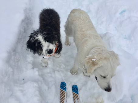 Winter Dog Care: Hazards and Overall Good Winter Health