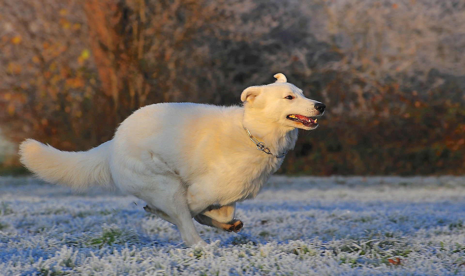 Dog Pack Outing  - Exercise & Playgroups