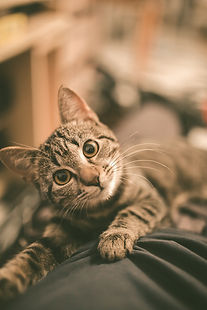 Cute kitty_edited.jpg