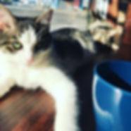 おはようございます!__C -way's Cat&Coffeeです!😼 ただ今