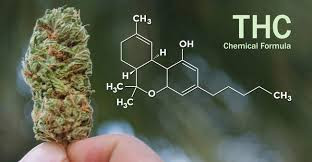 SUPER-POTENT THC IS OUR SUPERSTAR