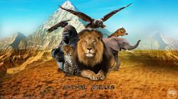 AnimalSeries | Cover