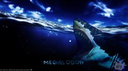 ANIMAL | MEG