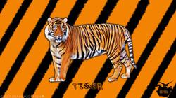 AnimalSeries | Tiger