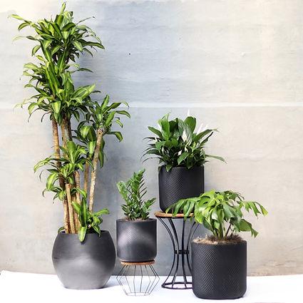 conjunto-de-plantas