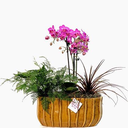 Arranjo Mini Orquidea e Plantas
