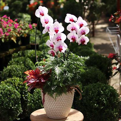 Arranjo Orquídea e Folhagens