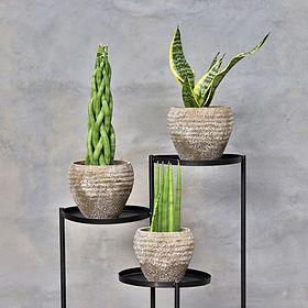 colecao-ceramica-vintage
