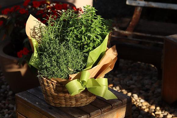 Cesto Gourmet com Ervas Aromáticas