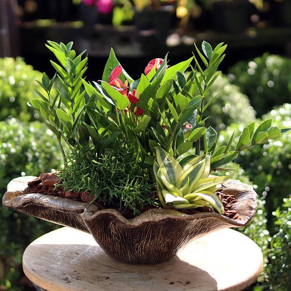 Mix de Plantas Bacia Rustica