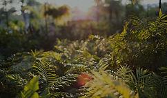 foto_00084_edited_edited_edited.jpg