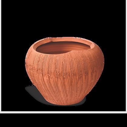 Vaso Coconut