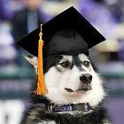 UW Husky Mascot