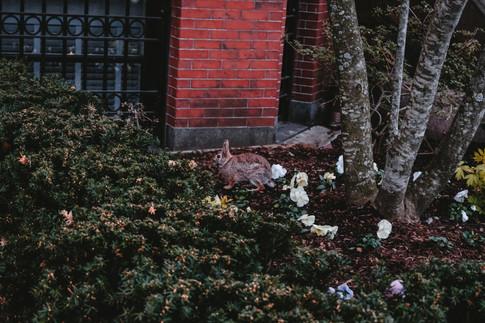 Spring in Boston | atelier terrarosa